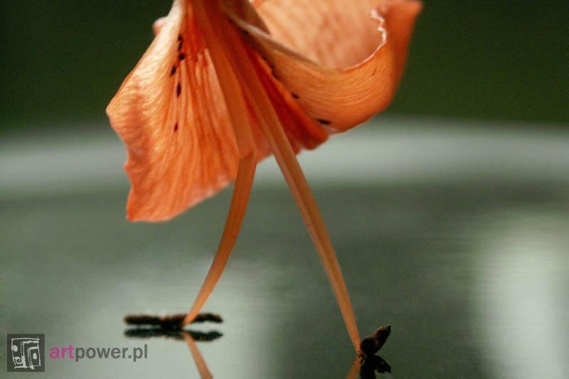 Balet, ballet, ballo...