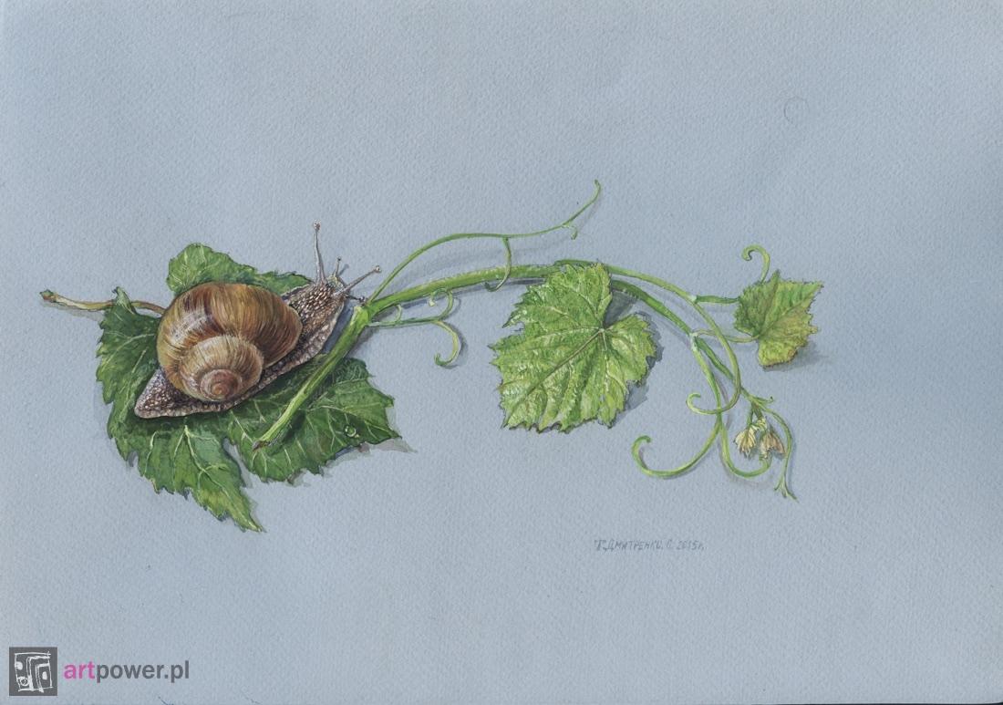Ślimak winniczek