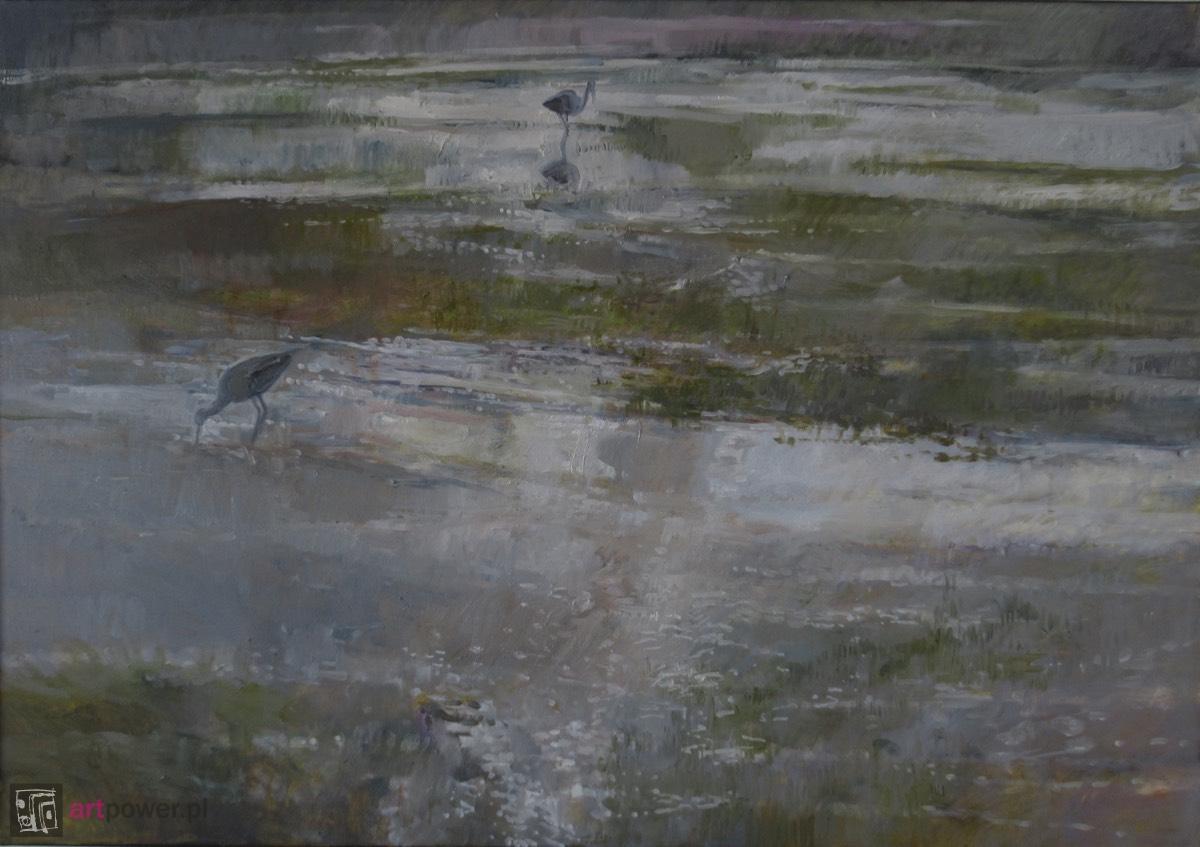 Srebrne mokradła z bocianami