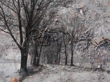 drzewa III