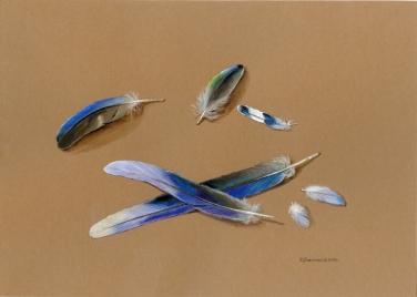 Niebieskie pióra